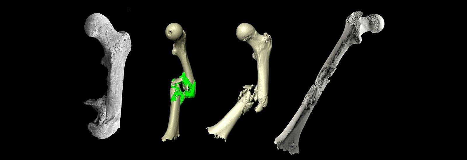 Pacea transfert impression 3d archeologie osteologie