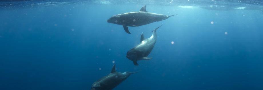 dauphin dauphins mammiferes marins etudes sismique impact marine respect industrie