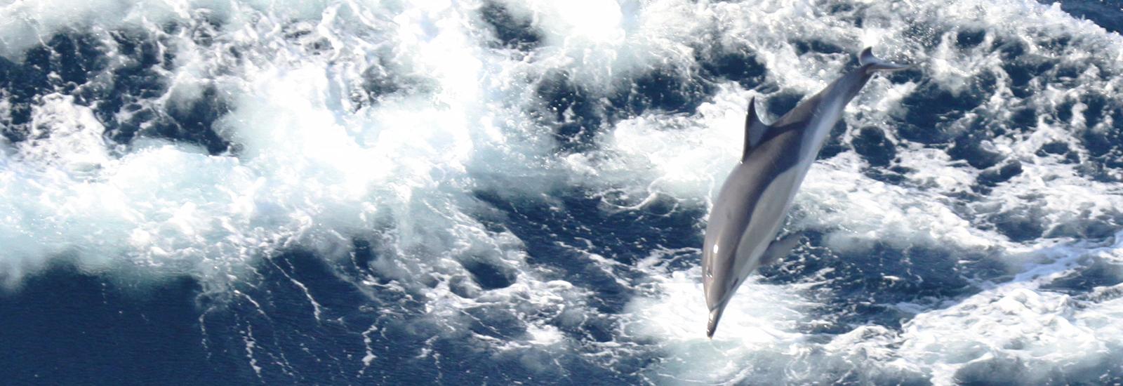 dolphin mammifere marin sismique industrie