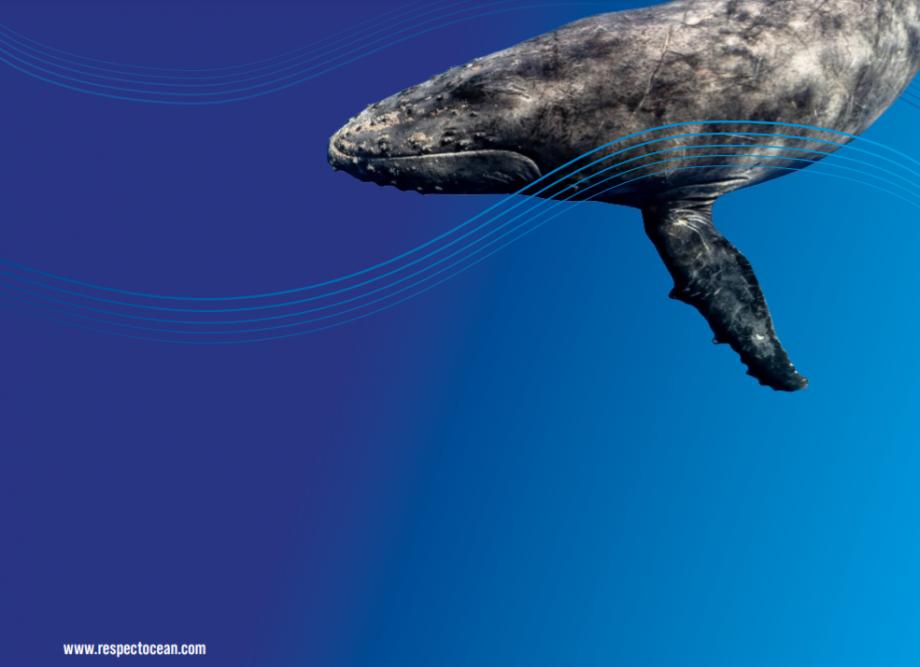 Couverture FAQ Respect Ocean - Pollution du bruit sous marin